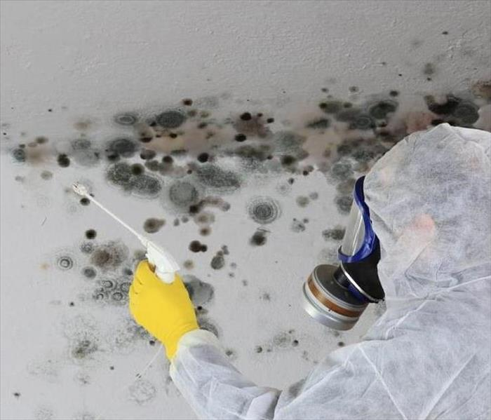 Removing mold from a ceiling in Chaska